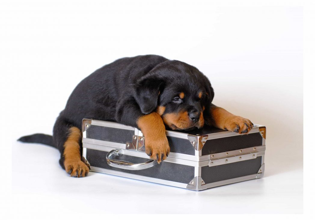 Dog Friendly Hotels Reading