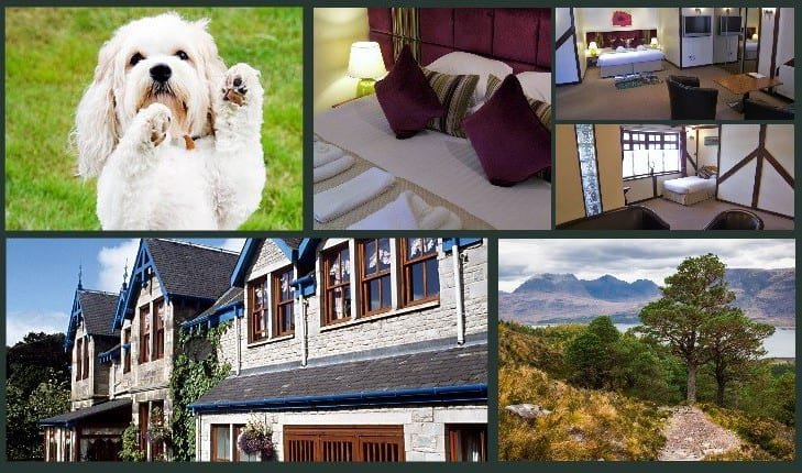 Dog friendly accommodation Pitlochry