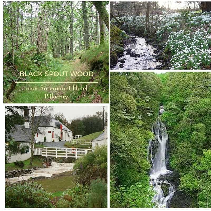 Black Spout woodland walk near Rosemount Hotel Pitlochry