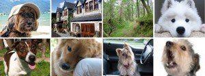 Pet friendly hotels Scotland