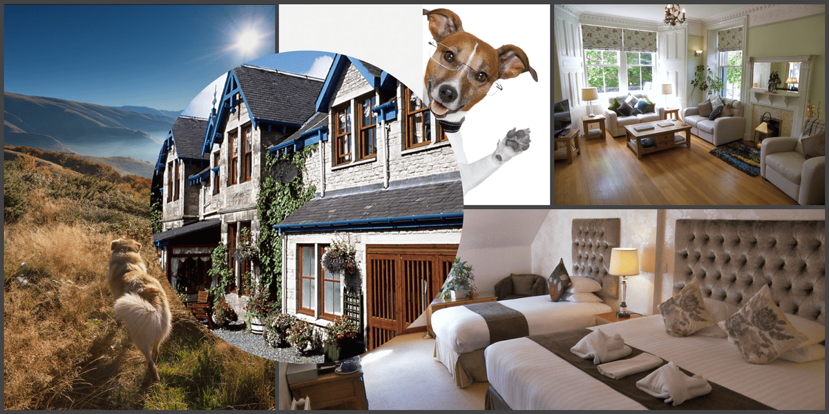 Dog friendly hotel Pitlochry