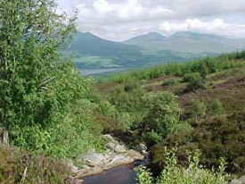 late availability Scotland