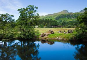 Dog friendly hotels scotland