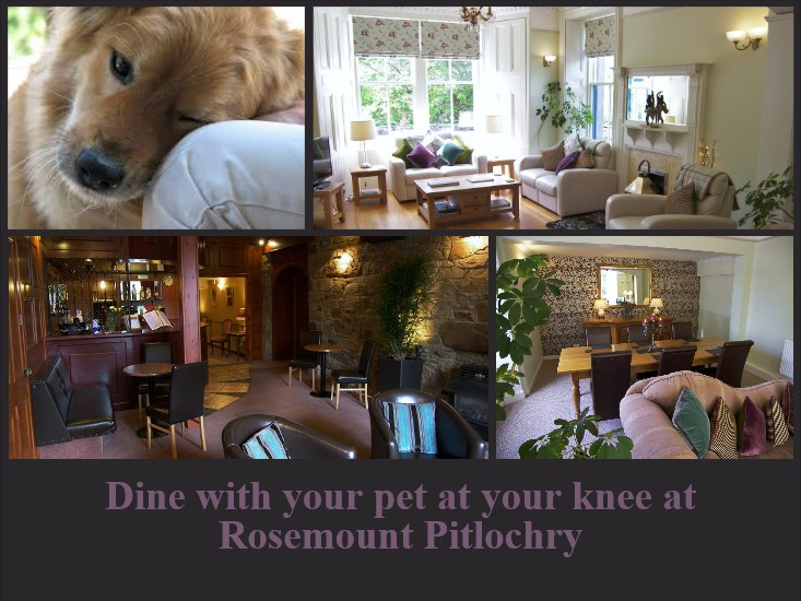Dog friendly hotels Pitlochry - dine with pet at knee