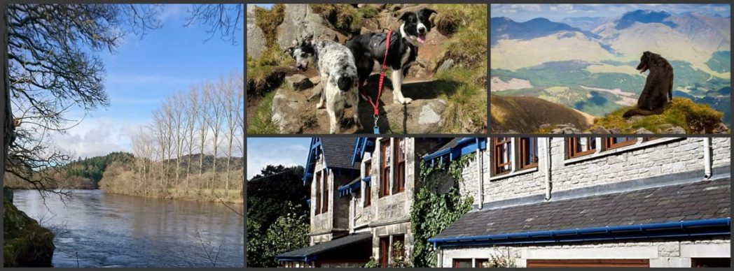 hotels in Pitlochry that take dogs