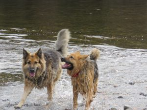 Dog Holidays Pitlochry