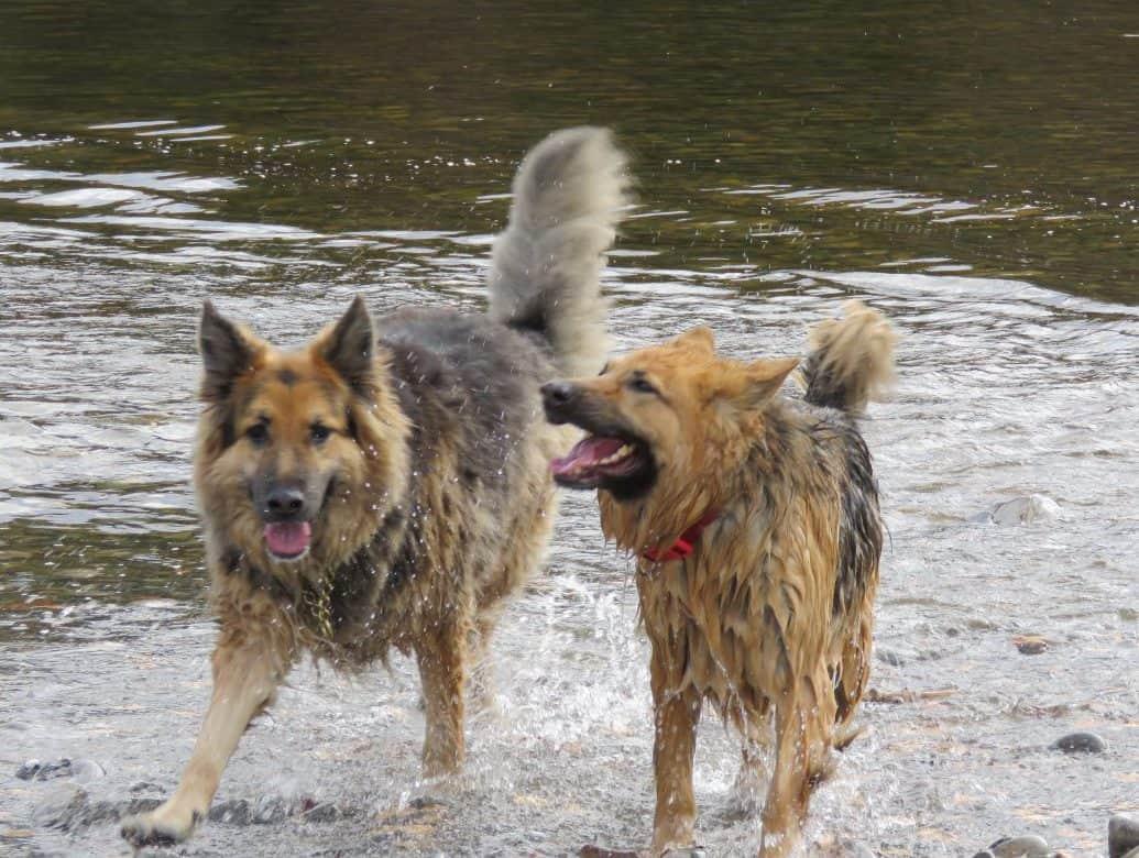 Dog Holidays Pitlochry
