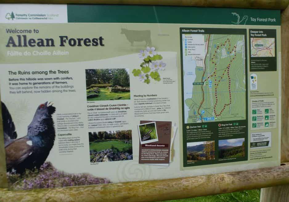 Allean Forest Walk.