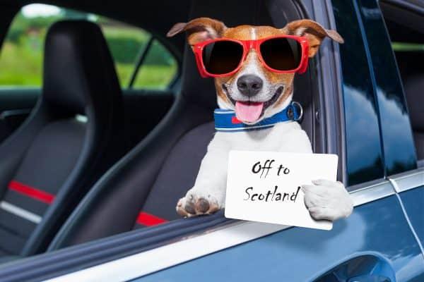 dog holidays Scotland