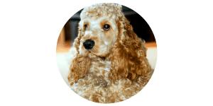 Dog Friendly Scottish Hotel