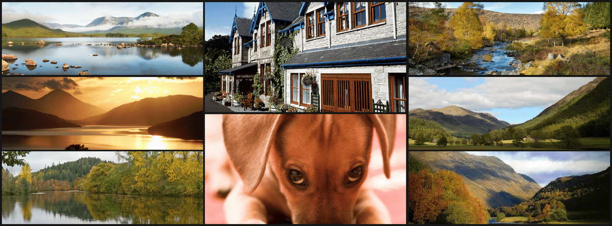 Dog friendly hotels Pitlochry