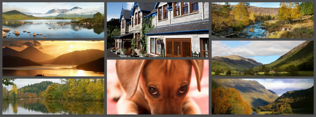 dog friendly B&B Pitlochry