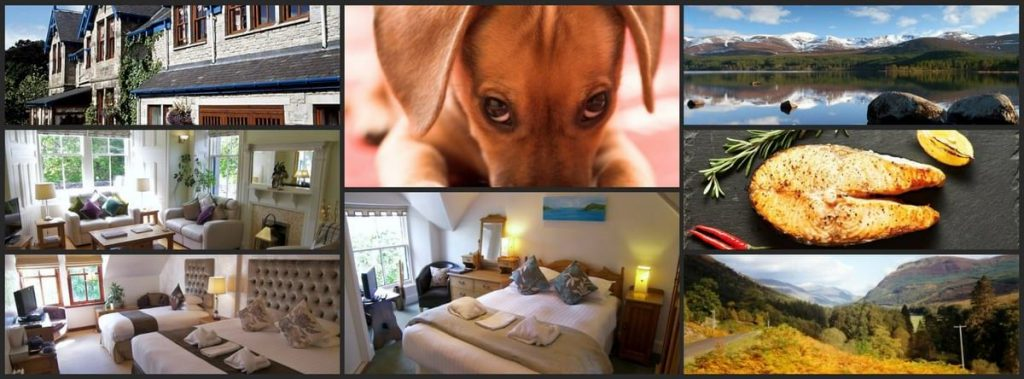 Dog friendly hotel Perthshire