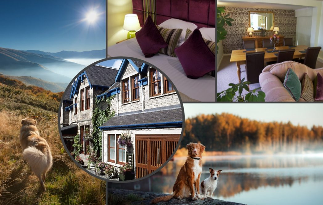 Dog friendly hotel scotland