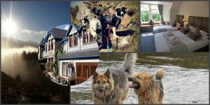 Dog friendly accommodation Perthshire Scotland