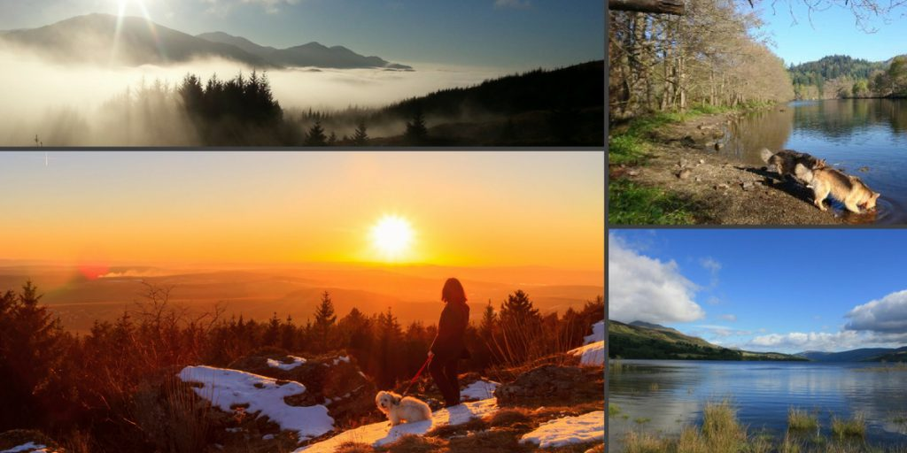 pet friendly breaks in Pitlochry. Dogs have great fun swimming in lochs or walking through the hills