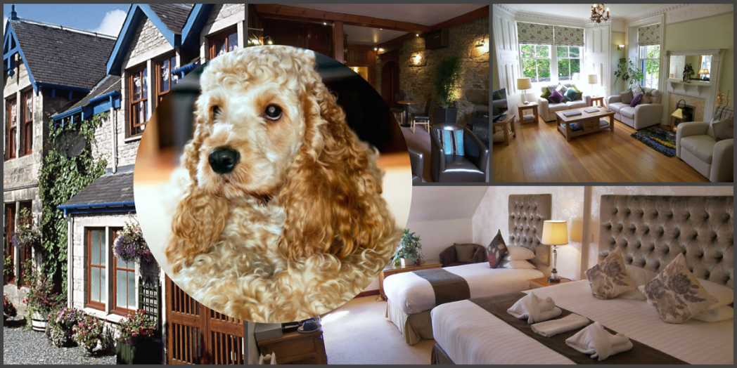 hotel in Pitlochry that takes dogs