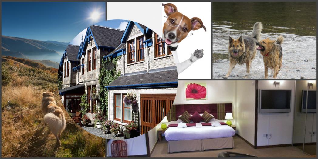 pet friendly accommodation Pitlochry