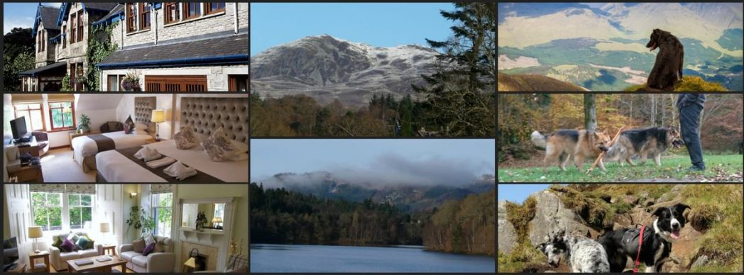 Dog Friendly Holidays Pitlochry
