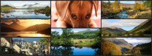 dog friendly accommodation Pitlochry