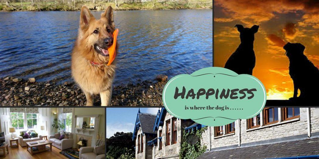Dog Walks Scotland Book