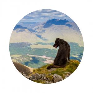 dog friendly hotel scotland