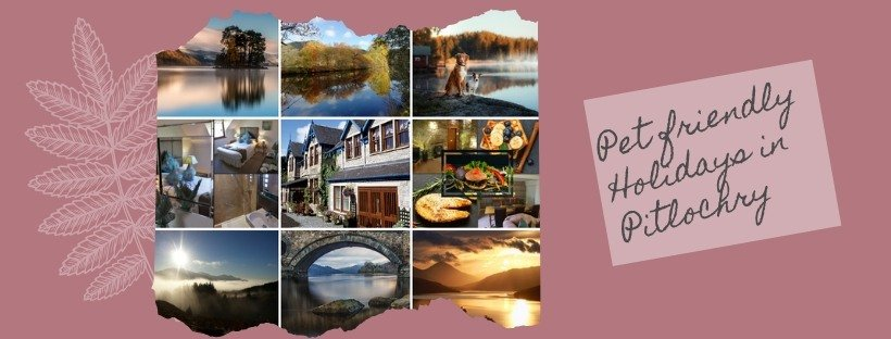 pet friendly holidays pitlochry