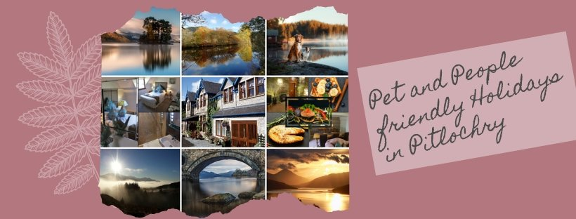 pet and people friendly hotel pitlochry