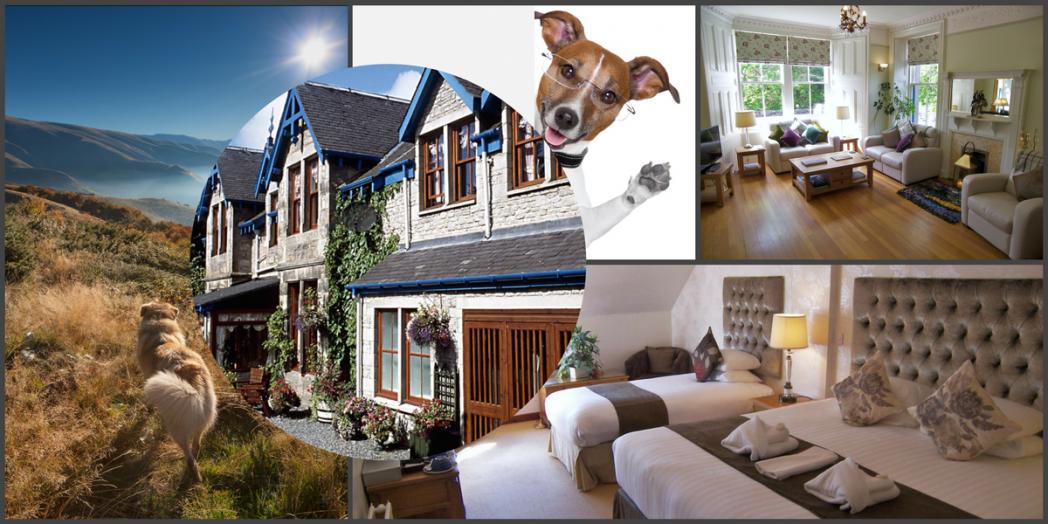 Dog friendly hotels in scotland dog friendly for Dog friendly hotel nyc