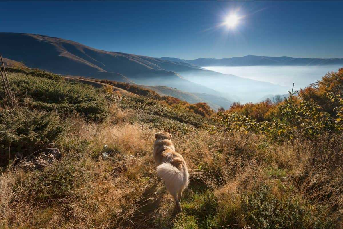 pet friendly hotel Pitlochry
