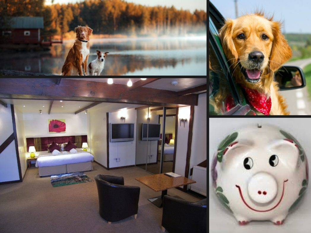 Dog friendly breaks Pitlochry